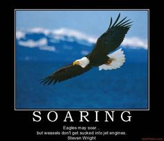 eagles may soar but weasels dont get sucked into jet engines   Eagles may soar... but weasels don't get sucked into ...