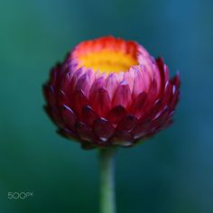 Glowball by Andreas Steegmann on 500px