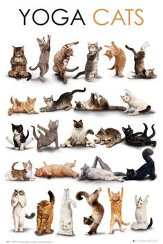 Get this Cat Art Poster and other select festively feline artwork, cat-themed home décor and gifts featuring cats and kittens to show that a Happy Home is a Cat Home! I Love Cats, Cute Cats, Funny Cats, Fun Funny, Cats Humor, Funny Yoga, Funny Humor, Animals And Pets, Funny Animals