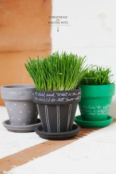 Wheatgrass in Painted Pots | Oh Happy Day!