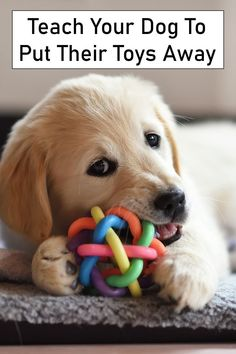 Dog Training Techniques, Dog Training Tips, Dog Commands Training, Teach Dog Tricks, Tricks For Dogs, Best Dog Toys, National Puppy Day, Cleaning Toys, Dog Games