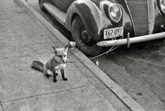 nothingvia:    (via Ford Fox: 1940 | Shorpy Historical Photo Archive)