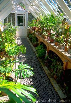 Heligan. Love this greenhouse interior!