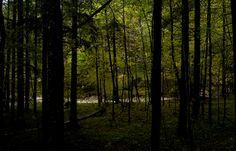 The Black Forest. Bavaria, Germany.