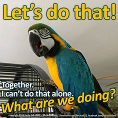 Share your life with a companion parrot, and never be alone again.