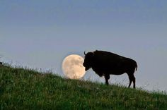 White Wolf : Flower Moon 2016: What You Need to Know About May's Full Moon