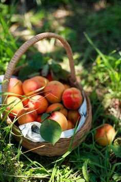 Somebody has been picking beautiful apricots, yum. So fresh & juicy.........
