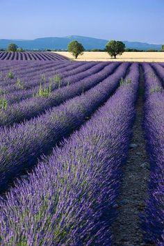 Beautiful Dreams: Foto