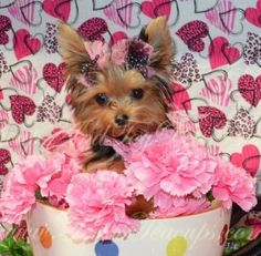 Carnations and a Yorkie... Yes!