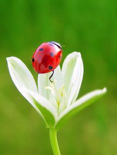 Ladybug on beautiful flower