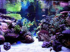 reef aquascaping | Aquascape Shots