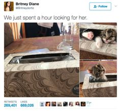 27 Tweets That Prove Cats Are Too Pure For This World