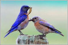 Bird photography by nigel - winnu