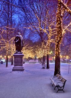 Madison square park lower 5th avenue Aw man.. Central Park at night in the winter.. I can't imagine how cold it'd be in person... and I also can't imagine how beautiful it'd be in person!! Central Park, New York City