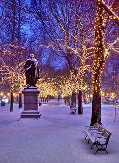 Arbres illuminés dans un parc.