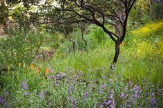 California Native Landscape, California Backyard, Alta California, Northern California, Starting A Garden, Mediterranean Garden, Woodland Garden, Garden Landscape Design, Plant Nursery