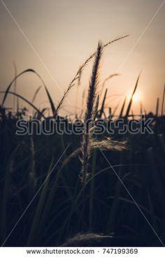 Cinematic de-haze of wild grass at sunset.
