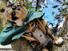 """animechase: """"Amazing Attack on Titan Cat CosplayAnime: Attack on Titan (Shingeki no Kyojin) Description: This amazing cosplay costume was actually hand made by this cat's owner. Show the Artist some. Cat Costumes, Cosplay Costumes, Snk Cosplay, Cat 2, Amazing Cosplay, Cat Collars, Image Macro, Just For Fun, Cosplay Girls"""
