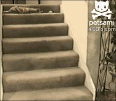 Lazy cat is lazy. | 12 Funny Cat GIFs (Plus A Bonus Video)