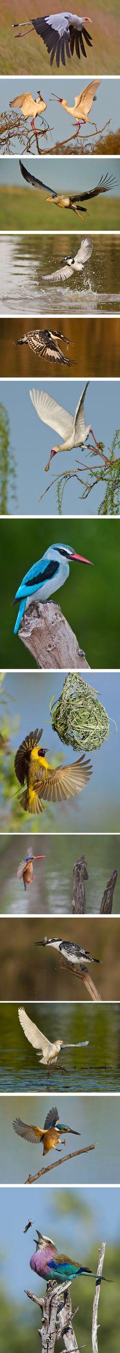 Photographer Morkel Erasmus #birds