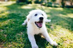You're probably wondering how are probiotics good for dogs? We have the answer! Probiotics For Dogs, Aussie Shepherd, Interesting Conversation, Mans Best Friend, Border Collie, Dog Owners, Fur Babies, Husky, Labrador Retriever