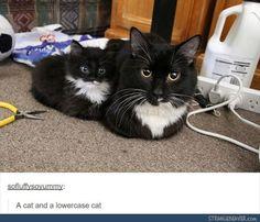 Funny tumblr post #CatTumblr