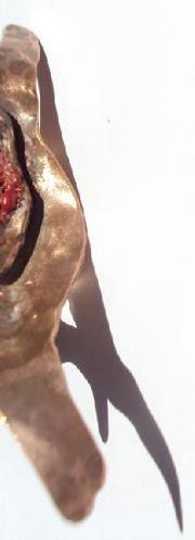 Anillo - Cobre esmaltado (soplete)