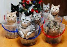 christmans kittehs