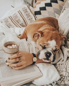 The major breeds of bulldogs are English bulldog, American bulldog, and French bulldog. The bulldog has a broad shoulder which matches with the head. Bulldog Puppies, Cute Puppies, Cute Dogs, Dogs And Puppies, Doggies, Animals And Pets, Cute Animals, Bullen, Dog Signs