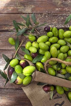 Your own homegrown olive harvest is perfect for curing, or even pressing for oil - get our cultivation tips now on Gardener's Path. How To Grow Olives, Growing Olive Trees, Olive Harvest, Starting A Farm, Mediterranean Plants, Fresh Avocado, Olive Gardens, Delicious Fruit, Large Plants