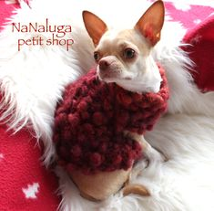 Chihuahua Dogs, Puppies, Yorkshire Terrier, Shih Tzu, Crochet Clothes, French Bulldog, Dog Cat, Wool, Knitting