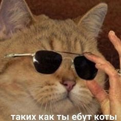 Russian Cat, Russian Memes, Stupid Cat, Stupid Memes, Hello Memes, Cool Pictures, Funny Pictures, Cat Icon, Cute Animal Memes
