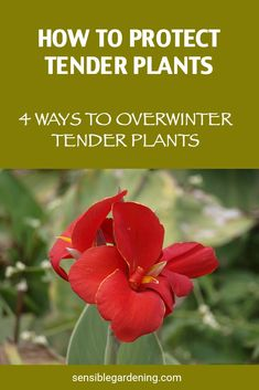 Four meathods to protect and overwinter your tender plants. Keep your plants year to year and save money. Enjoy pushing your gardening zone to enjoy new and different plants.