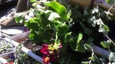Container Gardening Triolife Planter Product Revew - Planting Tips