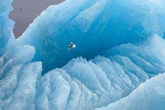 Ein Möwe gleitet über einen Eisberg. Die Aufnahme entstand in Spitzbergen,...