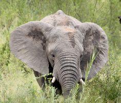 Sabi Sands Ranger, Safari, Namibia, Sands, Elephant, Animals, Tour Operator, Nature Reserve, Wilderness