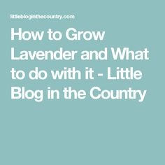 How to Grow Lavender and What to do with it - Little Blog in the Country