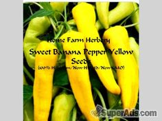 Sweet Banana Pepper Yellow Seeds, Order now, FREE shipping in New York NY - Free New York SuperAds