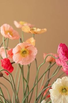 Poppies by tami