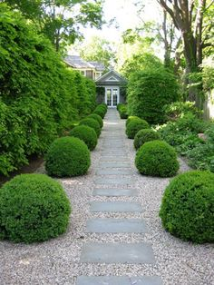 a flagstone path set in pea gravel is flanked by globe boxwoods in a Bridgehampton, Long Island, garden | designed by Deborah Nevins  Associates