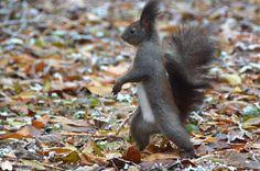 Walking squirrel by Stancu Andrei on 500px