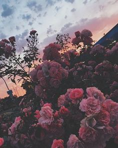 Android Wallpaper – The strength to stand alone is the strength to make a stand. To serve a purpose … - Wallpaper Sky Aesthetic, Flower Aesthetic, Summer Aesthetic, Aesthetic Grunge Tumblr, Aesthetic Plants, Aesthetic Backgrounds, Aesthetic Iphone Wallpaper, Aesthetic Wallpapers, Flower Wallpaper