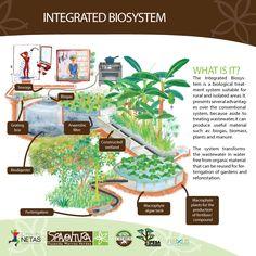 Biossistemas Integrados [BSI] - Patricia Yamamoto