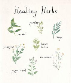 taryndraws: healing herb friends More
