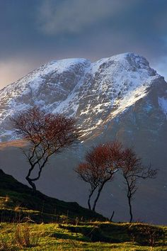 Birch trees and snowcapped mountains in Scotland.