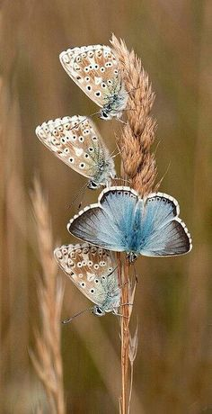 love the color, maybe for a small butterfly or moth tattoo Beautiful Bugs, Beautiful Butterflies, Amazing Nature, Beautiful Pictures, Amazing Photos, Stunningly Beautiful, Beautiful Creatures, Animals Beautiful, Cute Animals