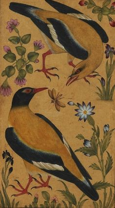 thehollowsquare:  two orioles.  india, 1610