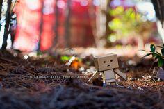 Tiptoeing Through the Pine Straw   Flickr - Photo Sharing!