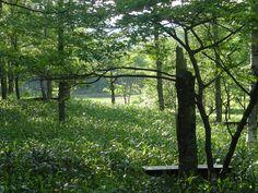 Forrest Garden. Tokachi Millenium Forest / デザイン 高野ランドスケーププランニング