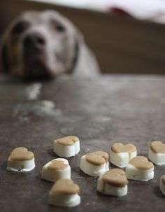 Valentine's Pets: DIY Natural Frozen Dog Treats